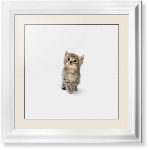 Kitten Framed Print Multicolor