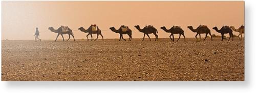 Camel Caravan Metal Wall Art, Single piece, 12 x 36 inches, True Color / Glossy, Multicolor