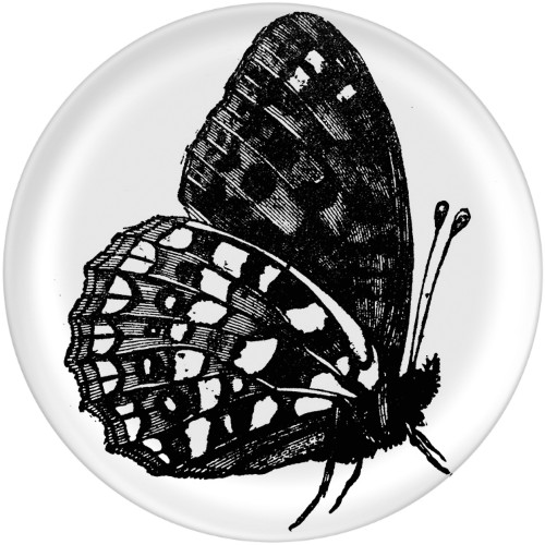 Butterfly Print Plate, 10x10 Plate, Multicolor