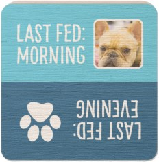 feed the dog wooden magnet